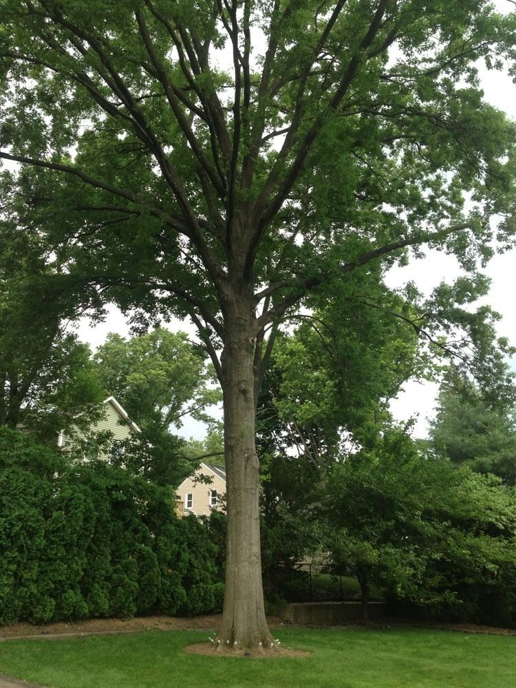 All Tree Care And Maintenance Companies Will Agree That In Woodlands Or Forests Other Areas Of Naturally Occurring Trees The Are Vying For